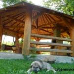 foisor cabane sucevita (3)